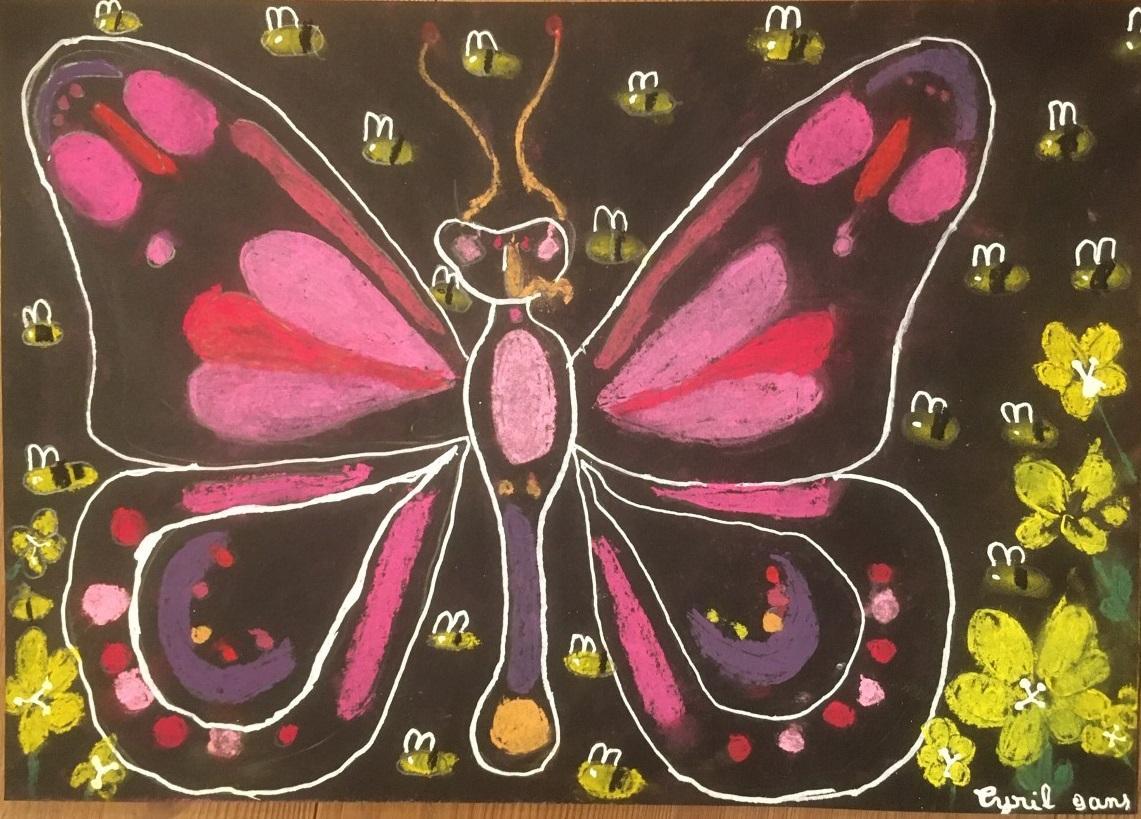Papillon cyril2